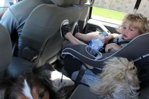 Three adults, three dogs, and a toddler in the extended cab of a pick up truck.